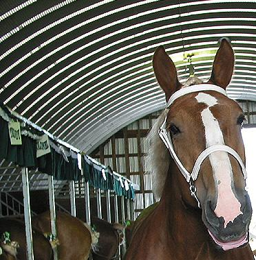 Cheval de race / Prize horse