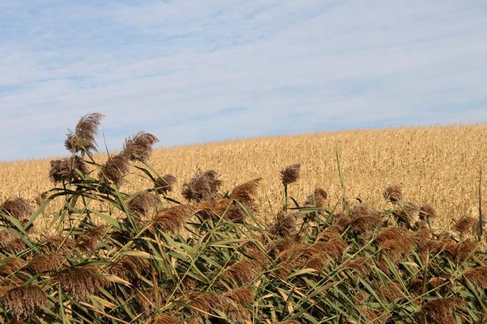 L'automne est arrivé dans les Cantons-de-l'Est. (Photo - Matthew Farfan)