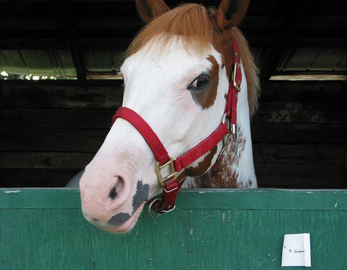 Cheval #1 / Horse #1