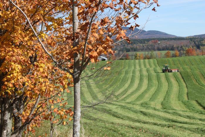 Farm field, Stanstead East. (Photo - Matthew Farfan)
