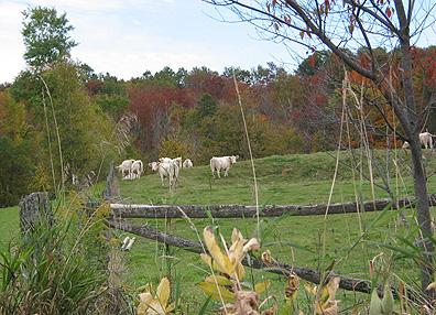 Pâturage, village de Massawippi / Pastures, Massawippi Village