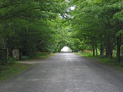 Tunnel d'arbres / Tree tunnel